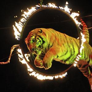 Цирки Фряново