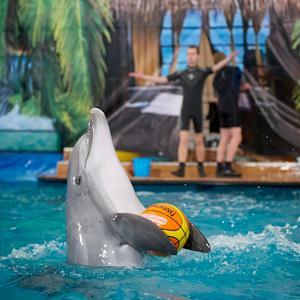 Дельфинарии, океанариумы Фряново
