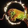 Цирки в Фряново
