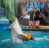 Дельфинарии, океанариумы в Фряново
