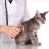 Ветеринарные клиники в Фряново